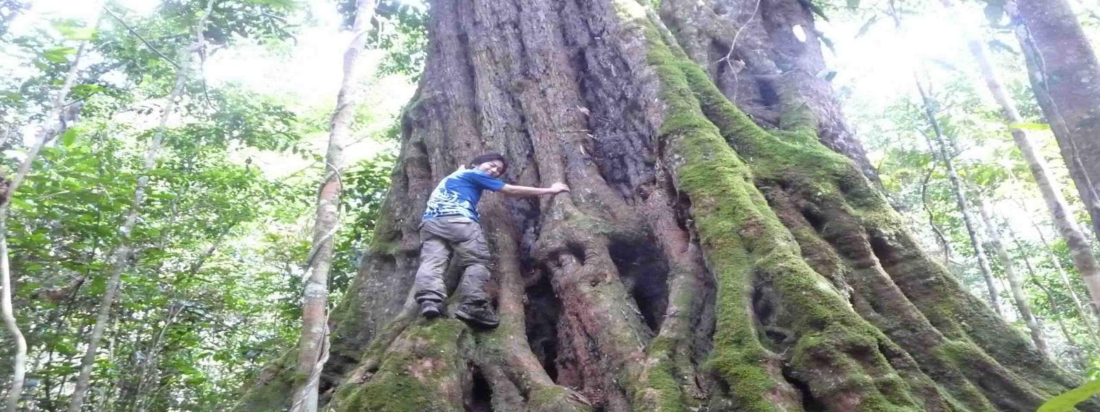 hutan3